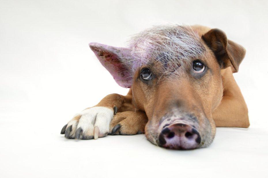 innerer Schweinehund